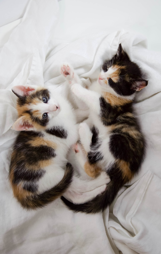 How We Rescued Our Kittens