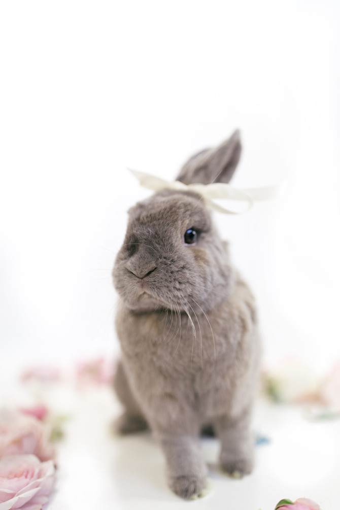Blizzy The Adorable Bunny