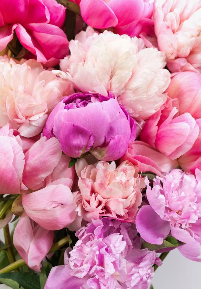 How Flowers Bloom