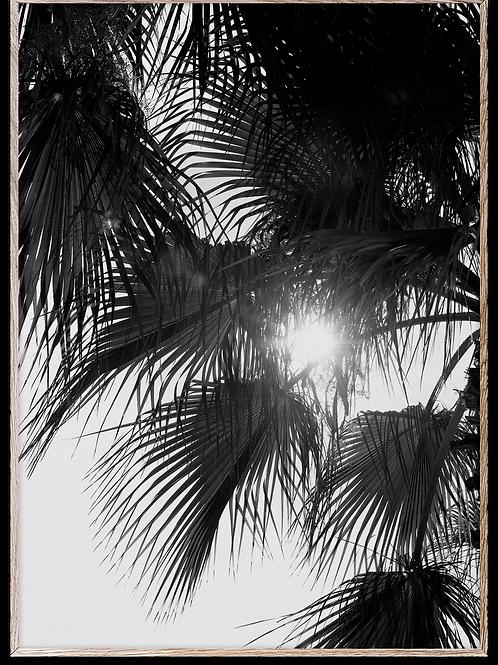 Photo print Palm trees