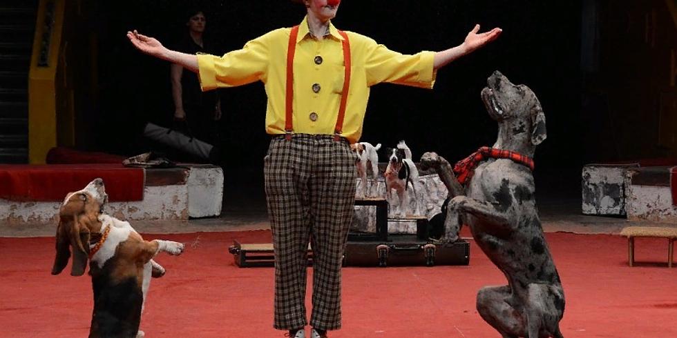 Мастер класс цирковой дрессировки собак