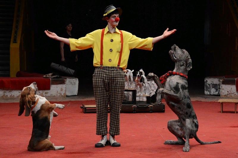 картинки собак цирковых