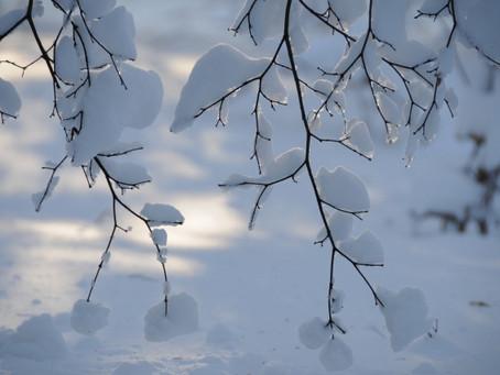 新年から大雪
