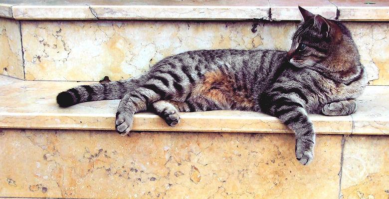 Feline behavior problems