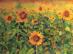 Friendly sun flowers