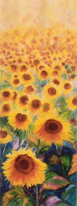 Sunflowers field -1-