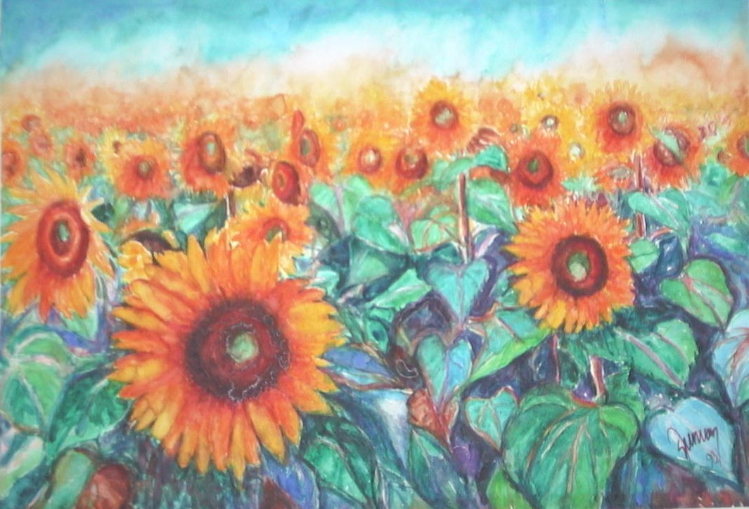 Sunflowers Field in the Summer