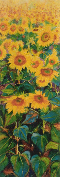 Sunflowers field -2-