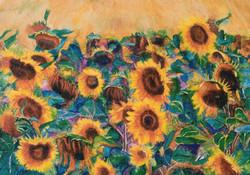 Sun flowers JPG