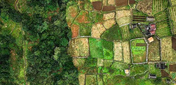 forest-farm.jpg