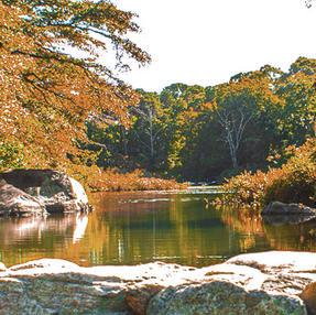 Old Mill Pond in Autumn.jpg