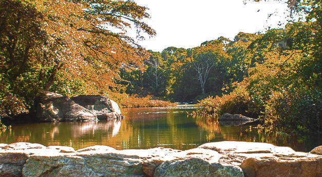 Old Mill Pond in Autumn.jpg