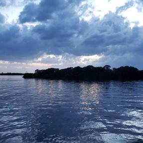 Black Skimmer Island Twilight