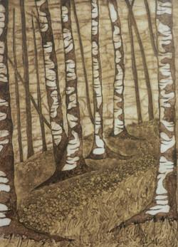 Siilver Birch 2