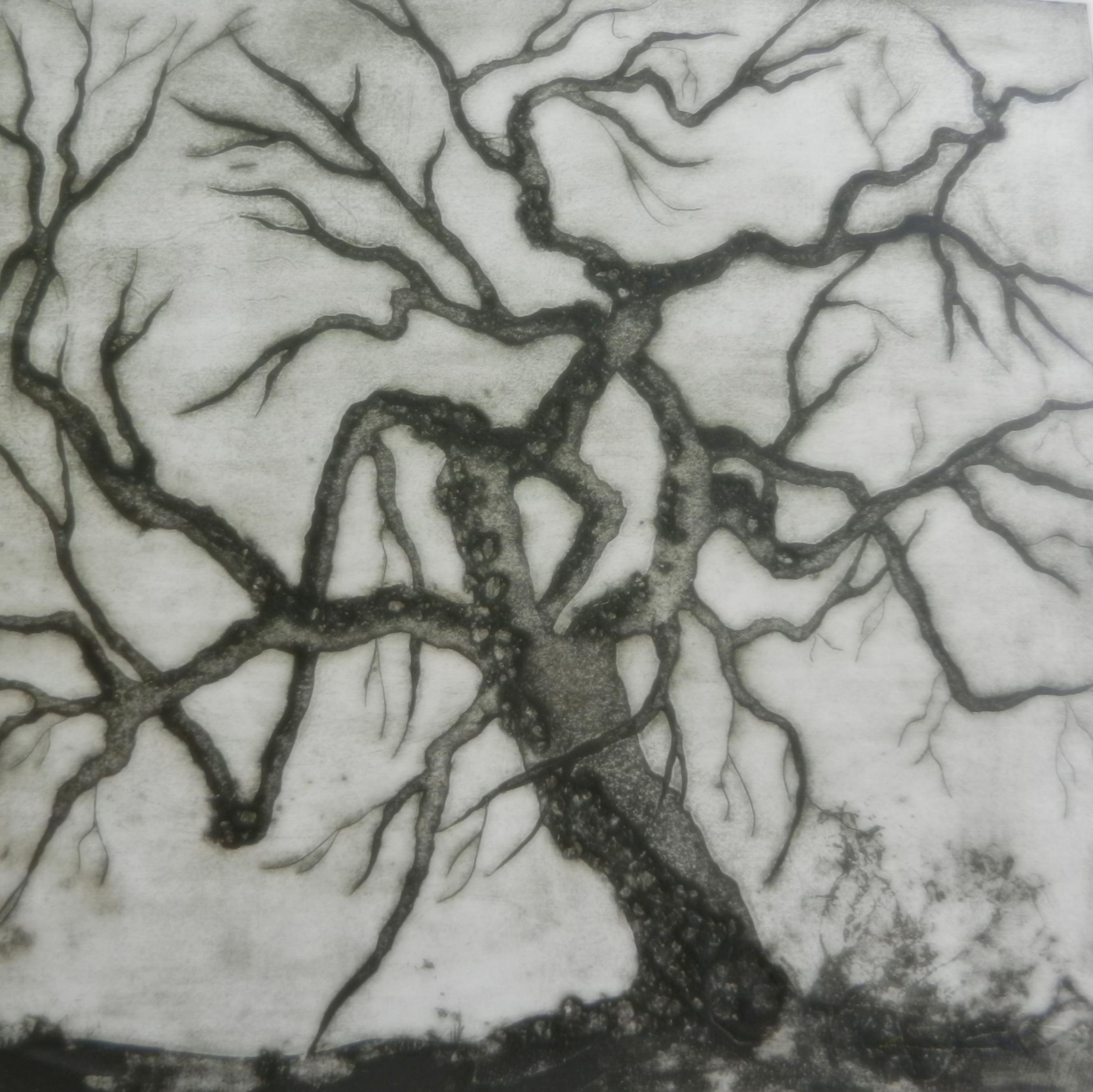 Ghost Tree Series 5