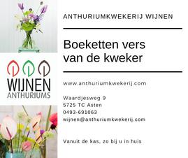 Advertentie Anthuriumkwekerij Wijnen.png