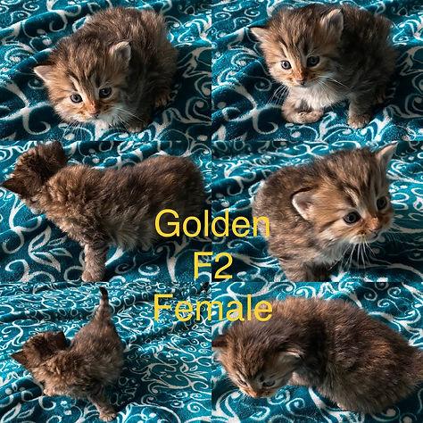 BF998739-A990-48FC-AF21-A9769B98B109.jpg