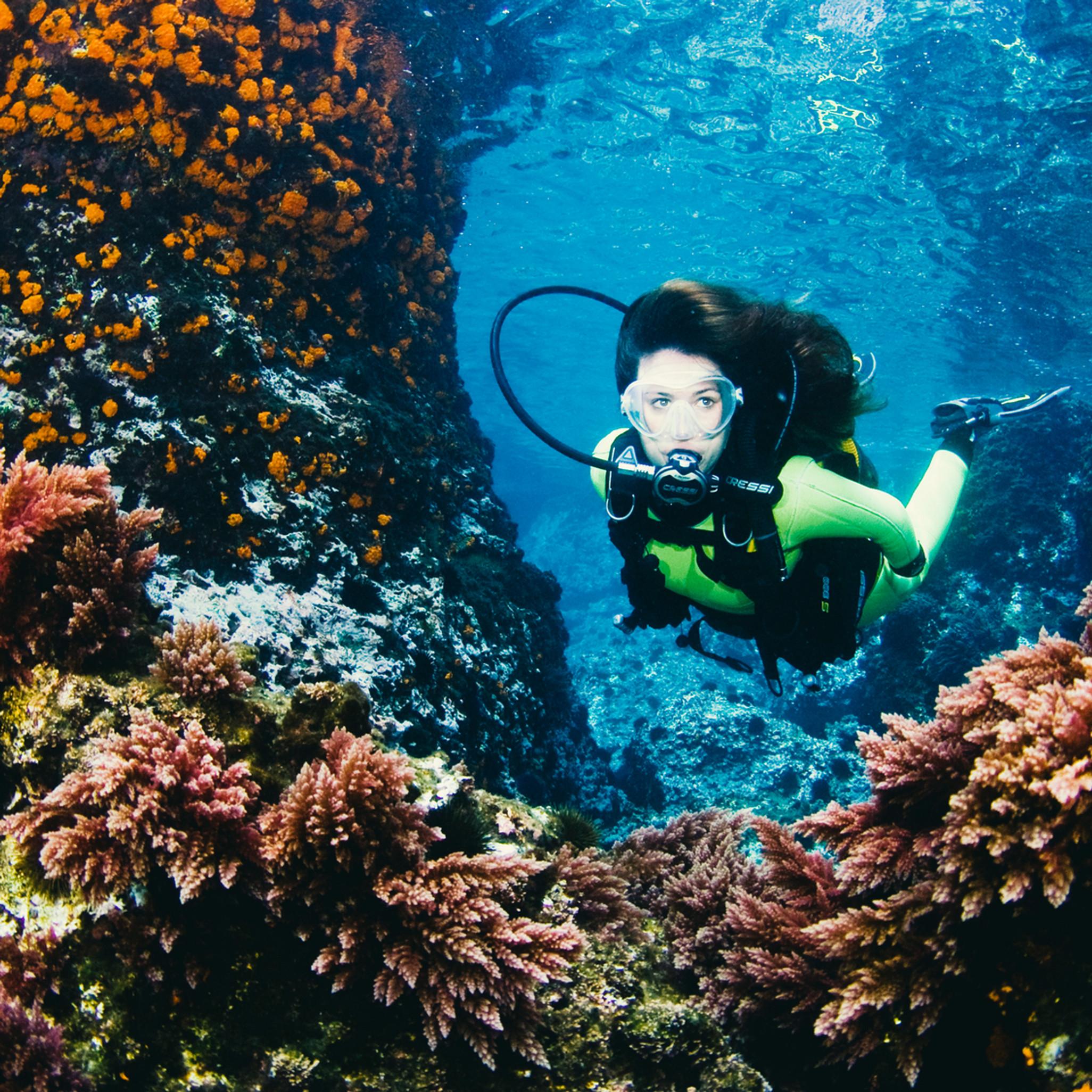Reef Diving Tour