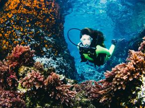 Branqueamento dos Corais