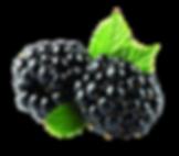 Download-Blackberry-Fruit-PNG-Image.png