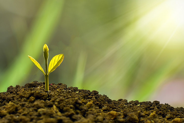 Sun rays over plant in soil