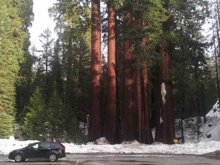Parcs Nationaux Ep 1 : Le Sequoia National Park!