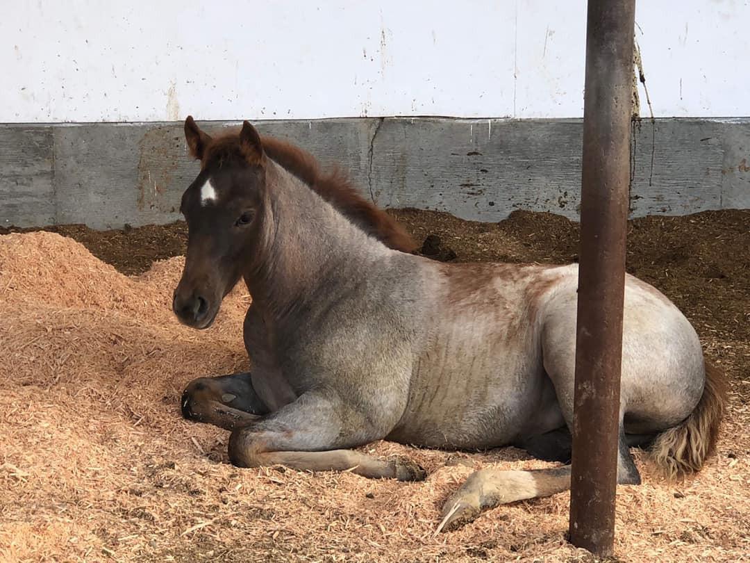 2019 Foal by Metallic Malice