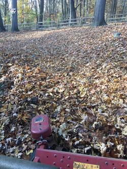 Before Leaf Clean Up