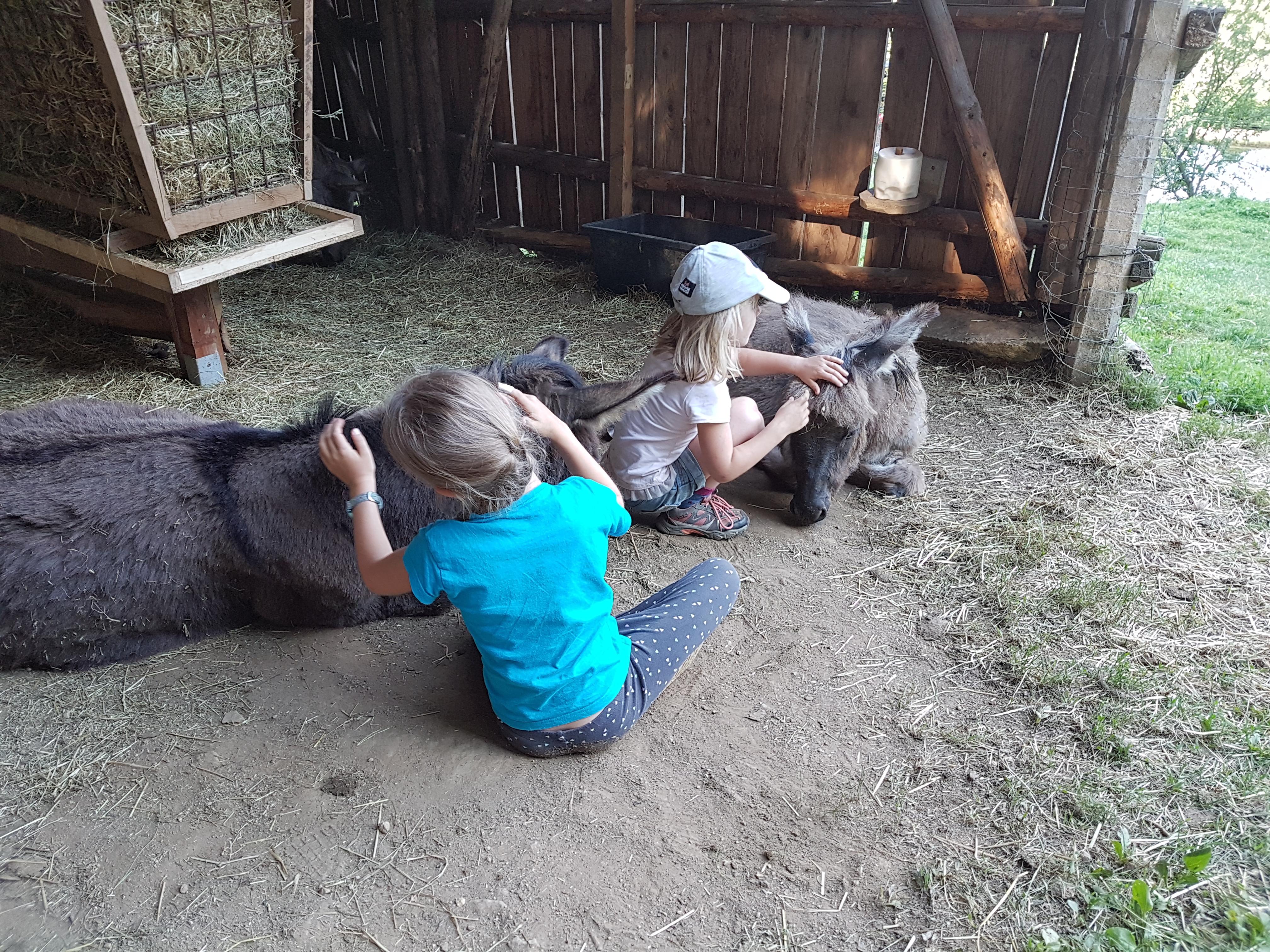 Kennenlernstunde der Esel und Ziegen