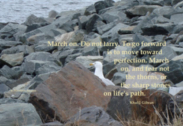 Seagull and Rocks and text.jpg