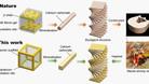 Bactérias podem fabricar peças para carros, aviões e pontes