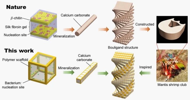 Além da biomimética: os pesquisadores não apenas copiaram a natureza, eles colocaram a natureza para trabalhar para eles.
