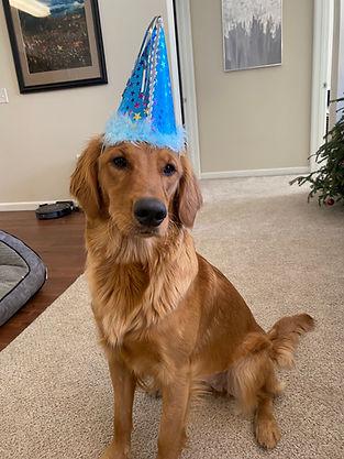Golden Retriever sitting, wearing a birthday party hat