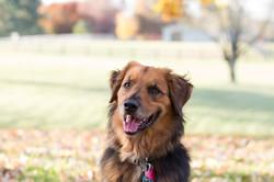 Enjoyable Dogs, Wendy Katz KPA CTP