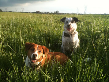 two dogs sitting in a grassy field