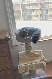 cat sleeping on top shelf of a cat tower