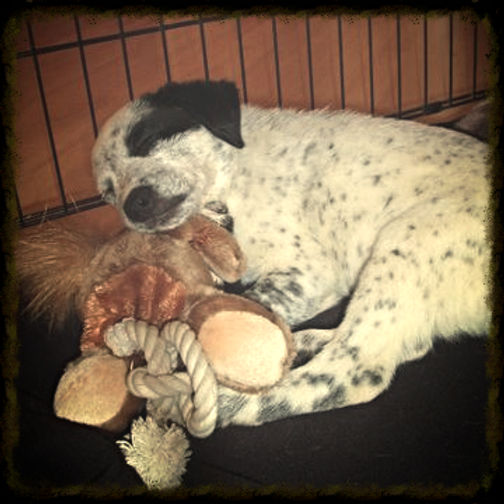 puppy sleeping with toys