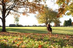 Enjoyable Dogs Dog Training Services