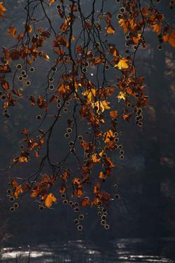Herbstfruechte