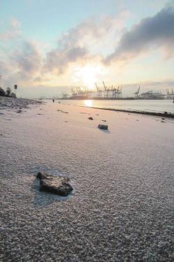 Strand-Schneezart