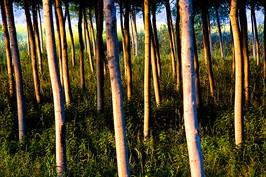 Toscana_06.jpg