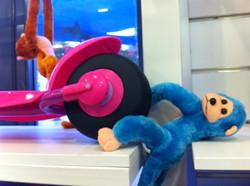 קופים כחולים בהפתעה