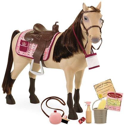 סוס מורגן - Morgan Horse