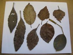 Roz Mellor Leaf Layout