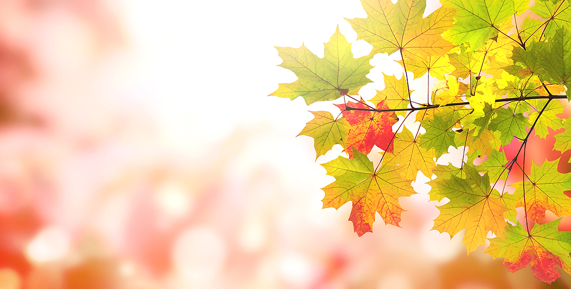 Autumn Leaves.tif