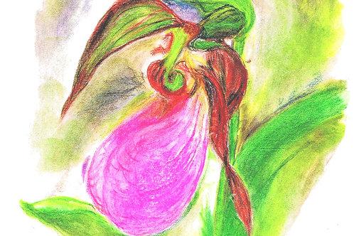 Wildflower Print: Pink Lady's Slipper