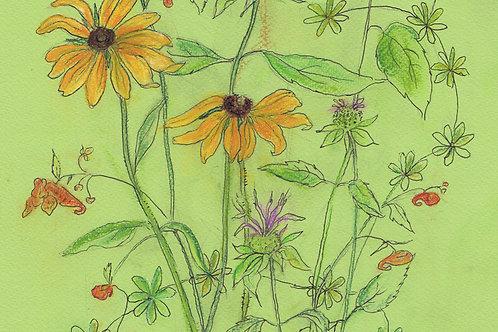 Wildflower Print: Black-eyed Susans