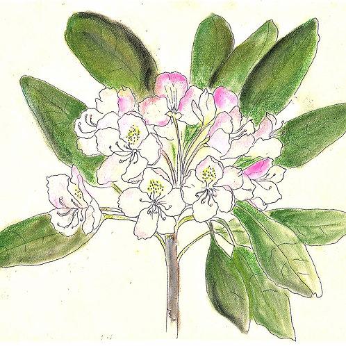Wildflower Print: Rhododendron