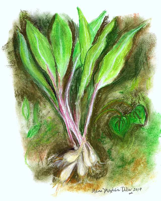 Wild and Wonderful Ramps