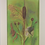 Thumbnail: Wildflower Prints: Cattail